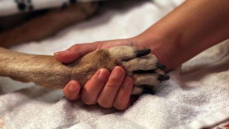 """Γιατί δεν είναι Ηθικό να αφήνουμε μόνο ένα σκύλο, όταν χρειαστεί να τον """"Κοιμίσουμε""""."""
